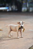 Portrait of little cute dog Stock Image