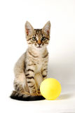 Portrait of little cute tabby  kitten on a white background with yellow ball Royalty Free Stock Image
