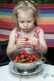 Portrait of little girl eating ripe red strawberry fruits from colander Stock Images