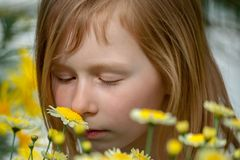 Portrait of a little girl of seven years, sniffing daisy royalty free stock photos