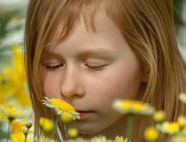 Portrait of a little girl of seven years, sniffing daisy stock photos