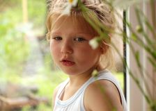 Portrait of a little girl with blond hair peeking out from behind the stalks of daisies stock photos