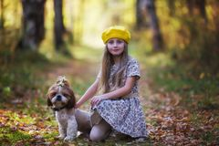 Portrait of a little girl in a yellow beret with a shit tsu dog against the backdrop of an autumnal forest. Looking into the camera stock photography