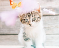 Portrait of little kitten Royalty Free Stock Photography