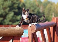 Portrait of little kitten on a fence Royalty Free Stock Photo