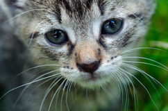 Portrait of the little kitten in the grass Royalty Free Stock Photos