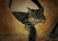 Portrait of little kitten sleeping in the box stock photography