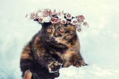 Portrait of a little kitten wearing Christmas wreath royalty free stock photography