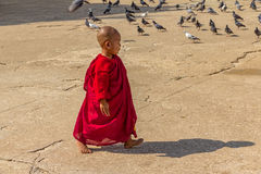 Portrait of a little monk Royalty Free Stock Images