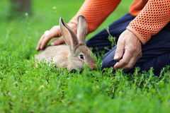 Portrait of little rabbit on green grass background Royalty Free Stock Photos