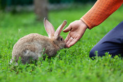 Portrait of little rabbit on green grass background Stock Image