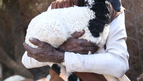 Portrait of local Indian man with turban holding a lamb in his hands. stock footage