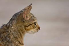 Portrait lovely Cat closeup Stock Images