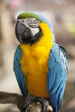Portrait of Macaw. A beautiful of parrot in a zoo Stock Photos