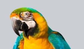 Portrait of macaw Stock Photos