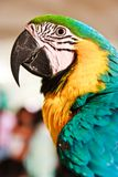 Portrait of macaw parrot Royalty Free Stock Photos