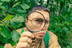 Portrait of male botanist with magnifying glass. In summer forest Stock Photography