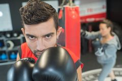 Portrait of male boxer. Male royalty free stock images