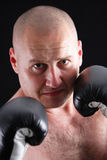 Portrait of a male boxer royalty free stock images