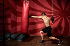 Portrait of male boxer training with gloves and shirtless. Boxing Training Stock Image
