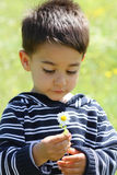 Portrait of a male child. With a daisy Stock Photography