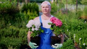 Portrait, a man gardener holding blooming hydrangeas in flowerpots in hands, against background of greenhouse