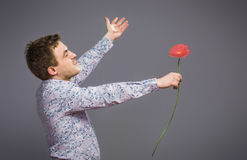 Portrait of man holding red flower. Isolated on grey background Royalty Free Stock Image