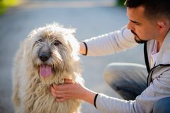 Portrait of a man playing with a big briard dog. Man and dog friendship concept stock image