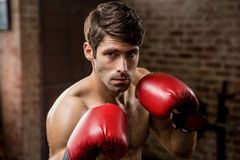 Portrait of a man wearing boxing gloves Royalty Free Stock Images