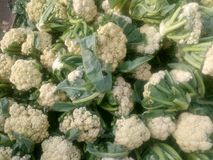 Cauliflower from a market Royalty Free Stock Photography