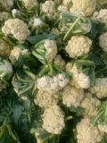 Cauliflower from a market Stock Photo