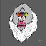 Portrait of the Mandrill in the colored glasses. Think different. Vector illustration. Portrait of the Mandrill in the colored glasses. Think different. A Stock Photos