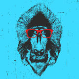 Portrait of  Mandrill with glasses. Hand-drawn illustration. T-shirt design. Vector Royalty Free Stock Photography