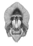 Portrait of Mandrill.
