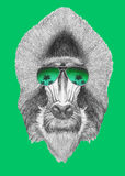 Portrait of Mandrill with mirror sunglasses. Royalty Free Stock Photos