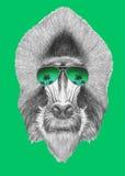 Portrait of Mandrill with mirror sunglasses. Hand drawn illustration Royalty Free Stock Photos