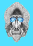Portrait of Mandrill with mirror sunglasses. Hand drawn illustration Royalty Free Stock Image