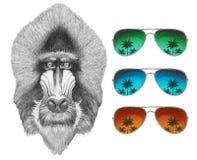 Portrait of Mandrill with mirror sunglasses. Hand drawn illustration Stock Photos