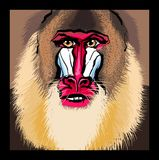 Portrait of a mandrill primate. Vector illustration Royalty Free Stock Photos