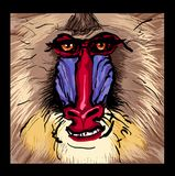 Portrait of a mandrill primate. Vector illustration Stock Photo
