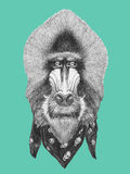 Portrait of Mandrill with scarf. Hand drawn illustration Stock Photography