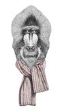 Portrait of Mandrill with scarf. Stock Photography