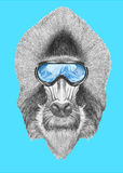 Portrait of Mandrill with ski goggles. Hand drawn illustration Stock Photography
