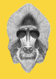 Portrait of Mandrill with sunglasses. Hand drawn illustration Royalty Free Stock Image