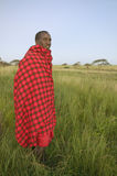 Portrait of Masai Warrior in traditional red toga at Lewa Wildlife Conservancy in North Kenya, Africa Royalty Free Stock Image