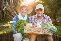 Portrait of mature couple carrying vegetables crate at garden stock images