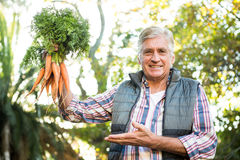 Portrait of mature gardener with carrots at farm stock images