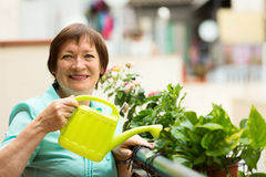 Portrait of mature housewife watering domestic plants Royalty Free Stock Images