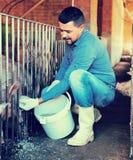 Portrait of mature male farmer feeding pigs Stock Photo