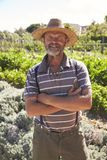 Portrait Of Mature Man Standing In Community Allotment stock photo